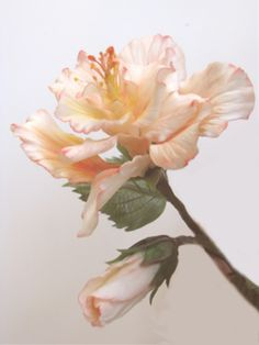 Sugar Flowers-gumpaste-gum paste-gum paste flowers-gum pastes flower-hibiscus-sugar hibiscus-gum paste hibiscus-gumpaste hibiscus-hydrangea-sugar hydrangea-gum paste hydrangea-gumpaste hydrangea-carnation-gum paste carnation-gumpaste carnation-sugar carnation-rose-sugar rose-gum paste rose-gumpaste rose-moth orchid-gum paste moth orchid-gumpaste moth orchid-gerbera daisy-gumpaste gerbera daisy-gum paste gerbera daisy-sugar gerbera daisy-miltassia-gum paste miltassia-gumpaste miltassia-sugar…