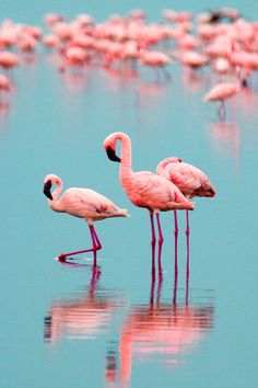 Pretty pink flamingos ✿