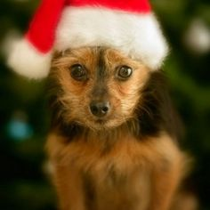 Guess who's ready for christmas?<3