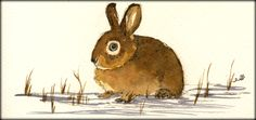 Rabbit original watercolor painting by Juan Bosco of sanmartin-artscrafts.com