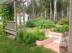 Hyötypuutarha - Kitchen garden - garden fence, mansikkaa, herneitä, salaatteja, ruohosipuli, sipuli, persilja, tilli. Lapland, Finland