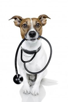 Signs of Poisoning in Dogs and Cats - Pet Poisoning Signs and Symptoms [I'm not a vet, but from personal experience I would add excessive panting to this list.  I suspected poisoning when my dog starting panting heavily and acting hyperactive when he'd just been lying around the house for several hours.]
