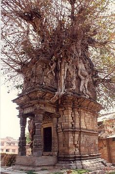 Crypt overtaken by nature, Katmandu, Nepa Tree house?