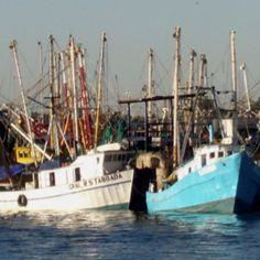 Shrimp Boats in Rocky Pt, MX