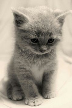 Come to mama sweet kitten