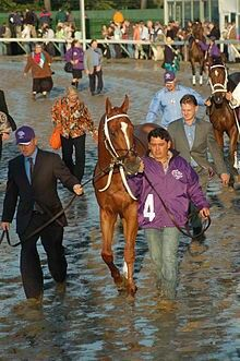 Curlin (2004-). 2007 Horse of the Year