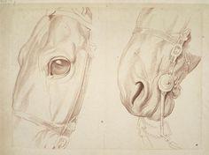 Deux études partielles d'une tête de cheval © RMN – Grand Palais, Musée du Louvre