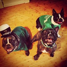 St. Pattys day frenchies and Boston terrier