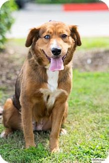 Santa Fe, TX - Border Collie Mix. Meet Chelsea, a dog for adoption. http://www.adoptapet.com/pet/17092743-santa-fe-texas-border-collie-mix
