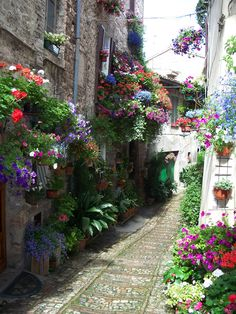 Spello, Italy. Love all the flowers