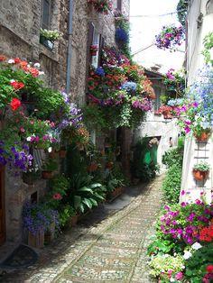Spello, Italy. Beautiful window boxes  // Great Gardens & Ideas //