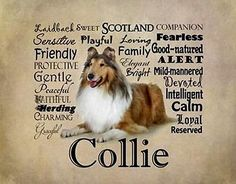COLLIE ROUGH SABLE DOG with Characteristics on ONE 16 inch fabric square panel. in Collectibles, Animals, Dogs | eBay