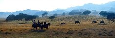 Pictures for Lodge Afrique - Dropbox Nature, Pictures, Animals, Africa, Photos, Naturaleza, Animales, Animaux, Animal