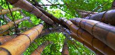 jardin botanico chiapas - Buscar con Google