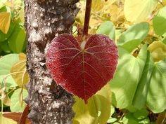 Når du taler med hjertet, lytter hjertet. Aristoteles.