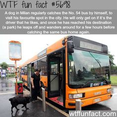 """Dog in Milan that catches the # 54 bus regularly - ONLY if His Favorite Driver is """"Working!"""" WTF! fun facts"""