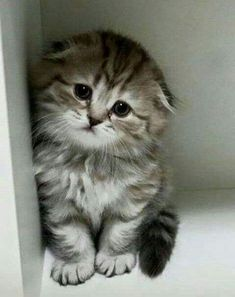 Cute Cats Captions Cute Kittens And Puppies Videos Cute Baby Cats, Kittens And Puppies, Cute Little Animals, Cute Cats And Kittens, I Love Cats, Crazy Cats, Kittens Cutest, Kittens Meowing, Bulldog Puppies