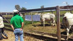 Feira do Pró-Genética em Matutina confirma forte demanda de touros