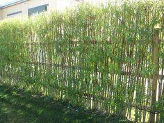 schermatura da giardino con piante di bamboo