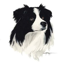 BORDER COLLIE Dog Art Print Signed by Artist DJ by k9artgallery