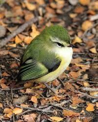 Stunning - Three Little Birds Tattoo Meaning Cute Birds, Pretty Birds, Small Birds, Little Birds, Colorful Birds, Beautiful Birds, Animals Beautiful, Green Birds, Animals And Pets
