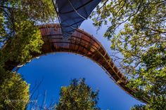 tree-canopy-walkway-path-kirstenbosch-national-botanical-garden-11, cape town