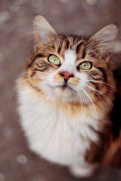 a beautiful face