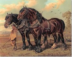 Cassell's Book of the Horse - Clydesdale Stallion & Mare 1890 Painting