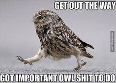This owl means business.