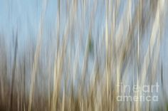 Sawgrass in Motion - Fine Art Print - Abstract Print  North Carolina Photograph, Marsh, Wetlands, Estuary, Sawgrass, Sawgrass, Coastal, Coast, Beach, Beach Decor, Abstract Photography, Shades of Blue, Tan, Ecru,  Swansboro North Carolina,