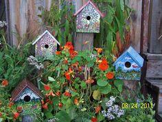 Nastursiums (edible) winding around birdhouses