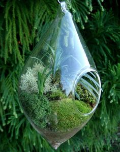 This teardrop glass vase contains mondo grass, reindeer moss and mood moss.