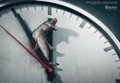 Every 60 seconds a species dies out! Cada 60 segundos una especie desaparece