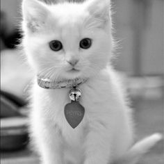 Adorable little white kitten... Named Pearl. Now I don't repin many cats, but...