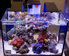 Ecoxotic EcoPico LED strips over gorgeous softie tank. Seahorse Aquarium, Coral Reef Aquarium, Marine Aquarium, Aquarium Fish, Marine Fish Tanks, Marine Tank, Saltwater Fish Tanks, Saltwater Aquarium, Nano Reef Tank