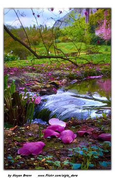 1000 Images About In The Gardens Of Ninfa On Pinterest