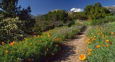 Things To Do in Santa Barbara - The Santa Barbara Botanic Garden Hiking Trails