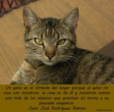 frases imagenes de gatos - Buscar con Google
