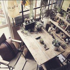 edenさんの、インドアグリーン,ミリタリー,nicoちゃんクッション,サボテン,多肉植物,足場板テーブル,DIY,Lounge,のお部屋写真