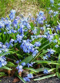 Spring 🌹🌼🌻