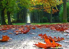I can hear the crunching of the leaves....love that sound!