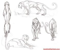 Image result for panther drawings sketches
