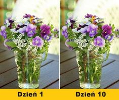 Warto o nich wiedzieć. Home Hacks, Dyi, Planting Flowers, Diy And Crafts, Glass Vase, Soda, Table Decorations, Garden, Plants