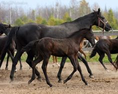 filly Mystic Russian horse.