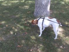 PT NOV 2014 BOISE IDAHO LUCKY PEAK STATE PARK DOG.