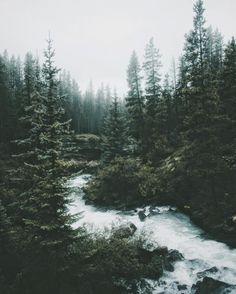 Serene surroundings Beautiful World, Beautiful Places, Beautiful Pictures, Oc Pokemon, Pine Forest, Foggy Forest, Destination Voyage, The Mountains Are Calling, Nature Aesthetic