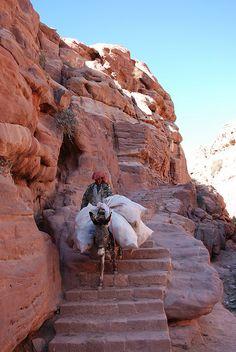 Working donkey: Petra, Jordan poor donkey!