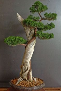 iphone 4 Bonsai tree. http://alliphone5cases.com