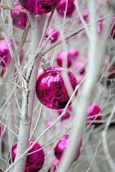 A touch of pink at Christmas