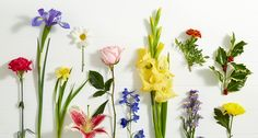 Find birthday flowers for your loved ones with the Birthday Flowers by Month guide from ProFlowers December Birth Flower, Birth Month Flowers, Bday Flowers, Birth Flower Tattoos, Honeysuckle Flower, Flower Meanings, Flowering Vines, Birthday Month, Purple Roses